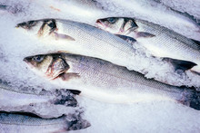 Raw Fish Seabass Ice Cubes, Fresh Fish At The Market. Sale Of Sea Fish.