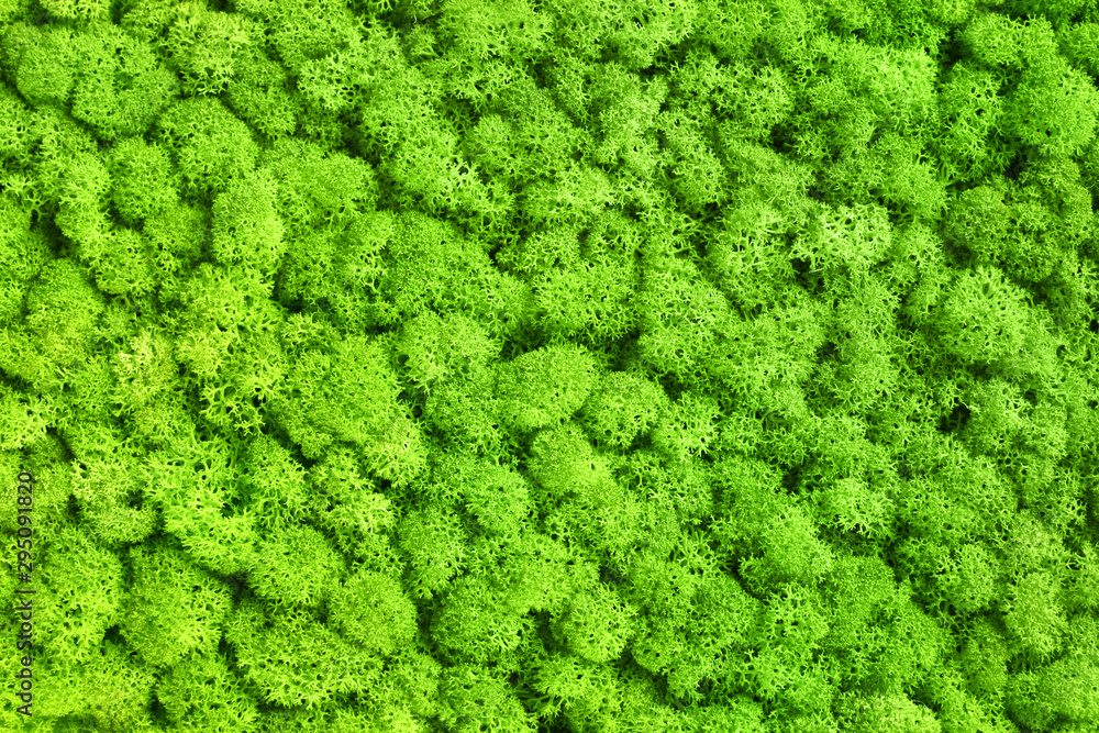 Fototapety, obrazy: Green decorative moss texture background