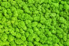 Green Decorative Moss Texture ...