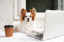 Working Dog. Cute Dog Is Worki...