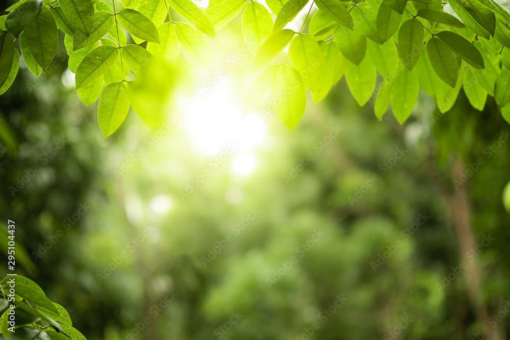 Fototapety, obrazy: Closeup beautiful view of nature green leaves on blurred greenery tree background with sunlight in public garden park. It is landscape ecology and copy space for wallpaper and backdrop.