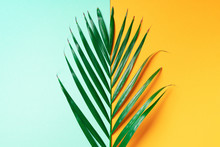 Palm Leaf On Trendy Yellow And...