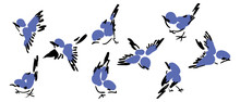 Colorful Bird Collection. Collection Of Cute Hand Drawn Bird Doodles. Black On White Vector Set