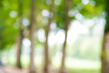 Abstract Green Park Blurred Background With Bokeh