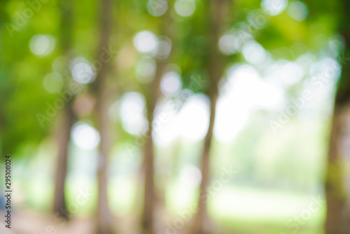 Obraz Abstract green park blurred background with bokeh - fototapety do salonu