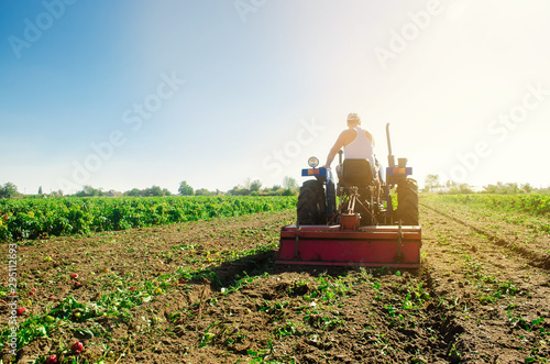 Tractor cultivates the soil after harvesting. A farmer plows a field. Pepper plantations. Seasonal farm work. Agriculture crops. Farming, farmland. Selective focus