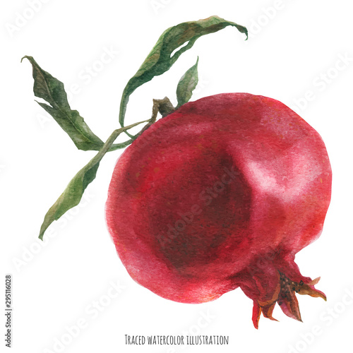 Big fresh red pomegranate fruit, watercolor traced illustration