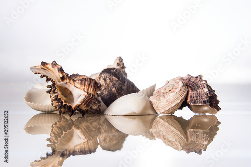 Seashell and reflection in glass on a white background Fototapet