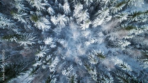 jodly-pokryte-sniegiem-z-bliska-las-w-sniegu-krajobraz-z-lotu-ptaka-swieta-nadchodza