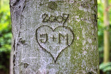 Heart With Monograms Carved In The Bark Of A Tree Trunk