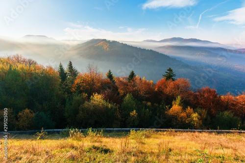 Spoed Fotobehang Baksteen misty sunrise in carpathian mountains. amazing nature scenery in fall season. trees in red and orange foliage. hillside in weathered grass. distant ridge in hazy atmosphere beneath a blue sky