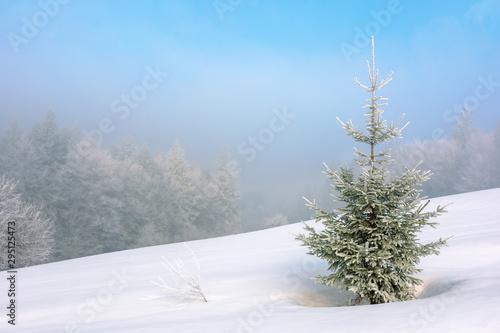 Fotografia little fir tree on a snow covered meadow