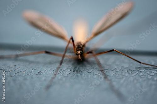 Still crane fly Fototapet