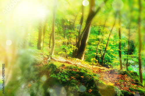 Foto auf AluDibond Lime grun Departure of summer. Early autumn colorful bright forest. Autumnal colorful juicy background. Beautiful light illuminating the scene.