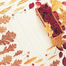 Autumn Composition. A Small Bo...
