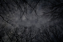 Dark Sky With Tree Silhouettes