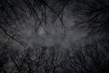 Dark Sky With Tree Silhouettes