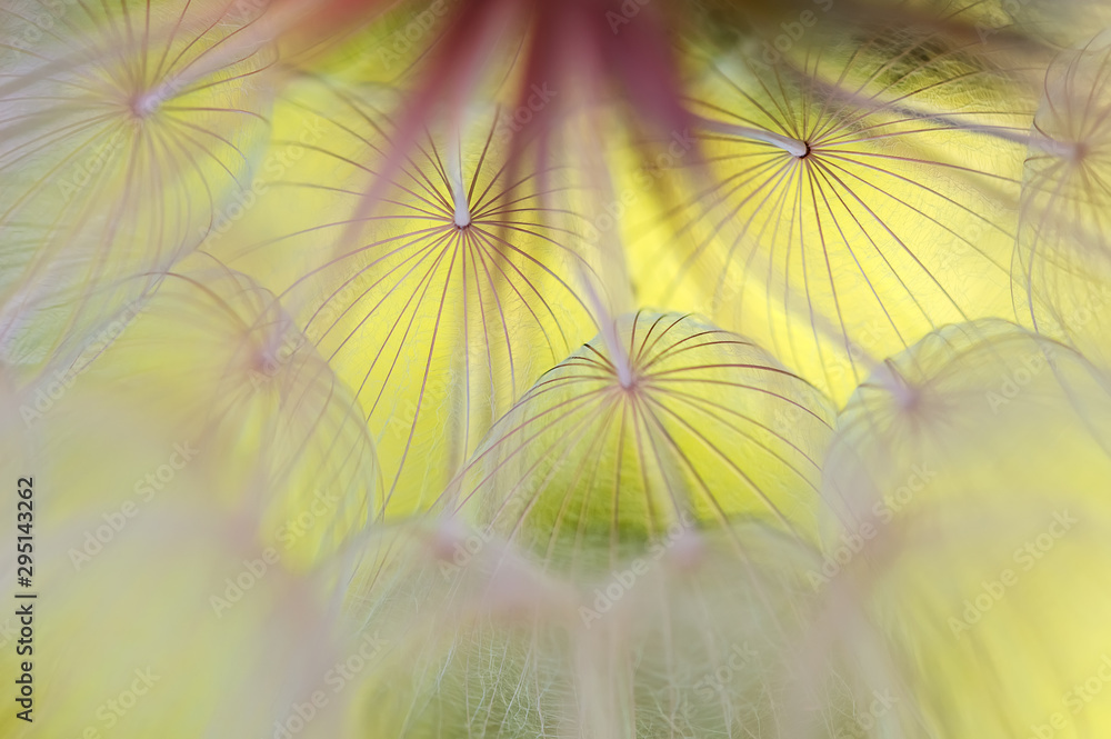Abstract macro of a dandelion on a yellow background. Beautiful artistic image of a dandelion close-up. Selective soft focus