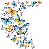blue butterflies fly