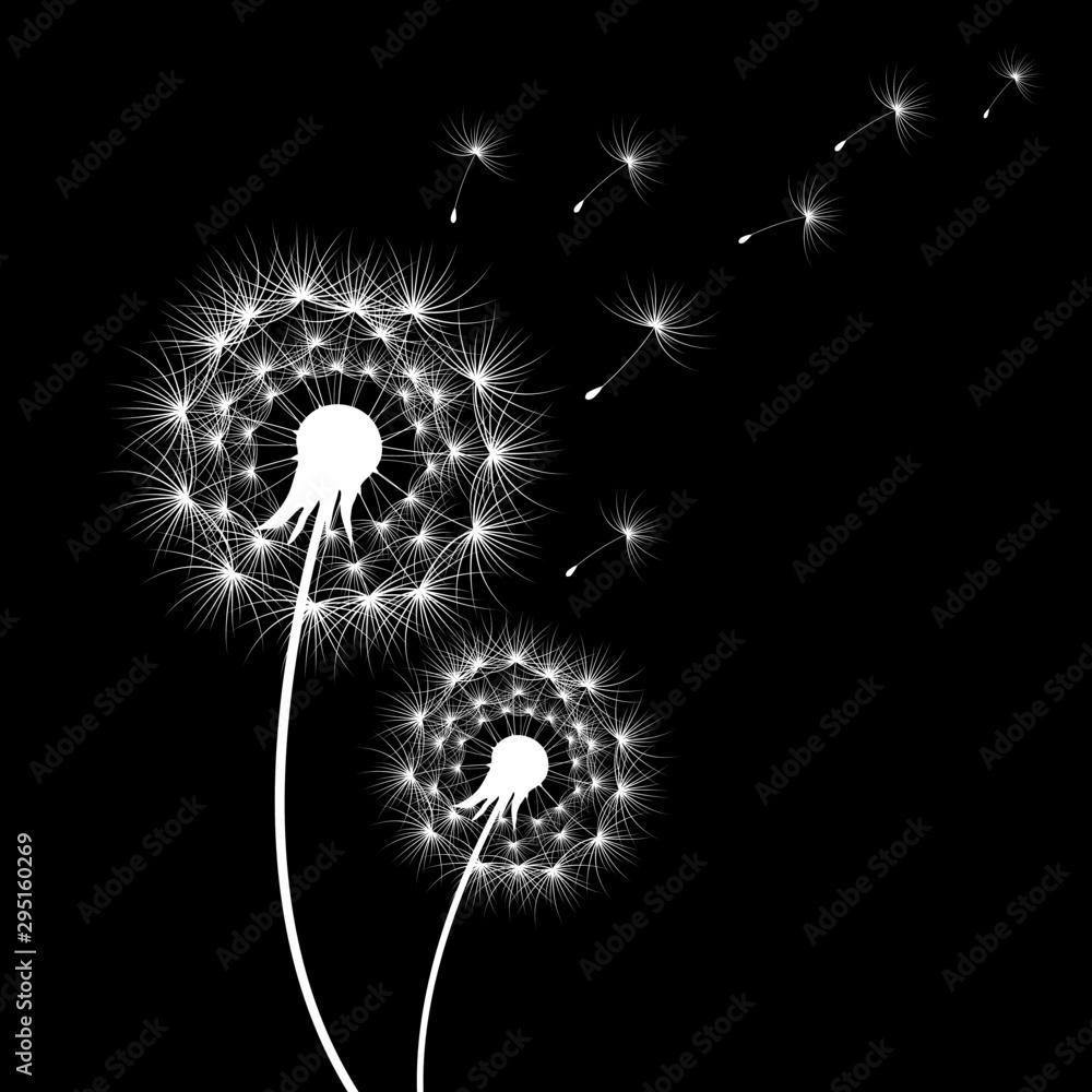 Fototapety, obrazy: silhouettes of dandelions in black