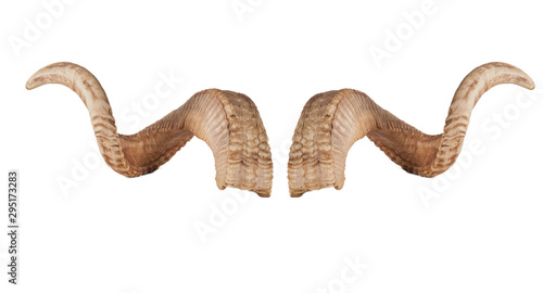 Papel de parede pair of sheep horns isolated on white background