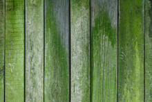 Old Shabby Wooden Wall Covered With Green Moss. Rustic Background And Texture. Close-up