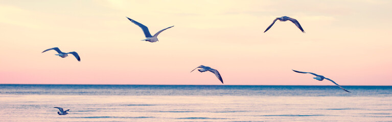 Fototapeta Rzeki i Jeziora Large group flock of seagulls birds on sea lake water and flying in sky on summer sunset. Web banner header for website. Toned with retro vintage hipster warm filters. Outdoor nature fauna.