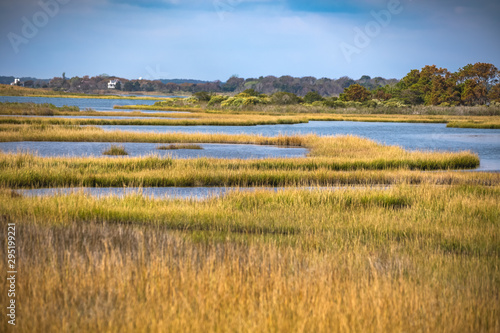Foto Life of the Forest Nature Trail at Assateague Island