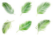 Leinwanddruck Bild Collection of palm leaves isolated on white background.
