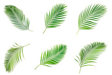 Collection Of Palm Leaves Isol...