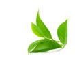 Leinwanddruck Bild - Green tea leaf isolated on white background