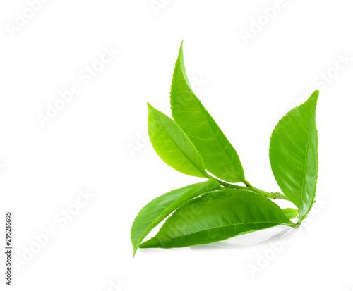 Fototapeta Green tea leaf isolated on white background obraz