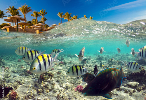 Underwater Scene With Reef And Tropical Fish Wallpaper Mural