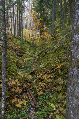 Dark Green Forest in Northern Europe