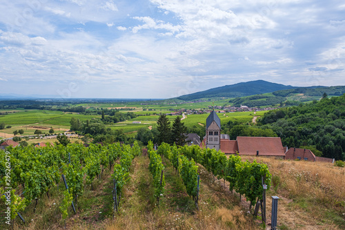 Obraz Blick auf die Weinberge von Itterswiller/Frankreich im Elsass - fototapety do salonu