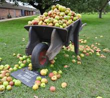 Old Wooden Wheelbarrow Full To...