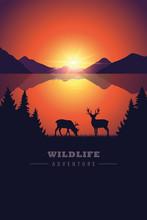 Elk In The Wilderness Wildlife...
