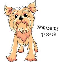 Vector Yorkshire Terrier Dog