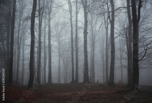 Poster de jardin Taupe Panoramic view of the foggy autumn forest in the mountains.