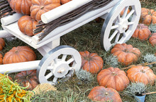 Pumpkins On A White Wooden Wagon. Composition With Pumpkins On A Straw.