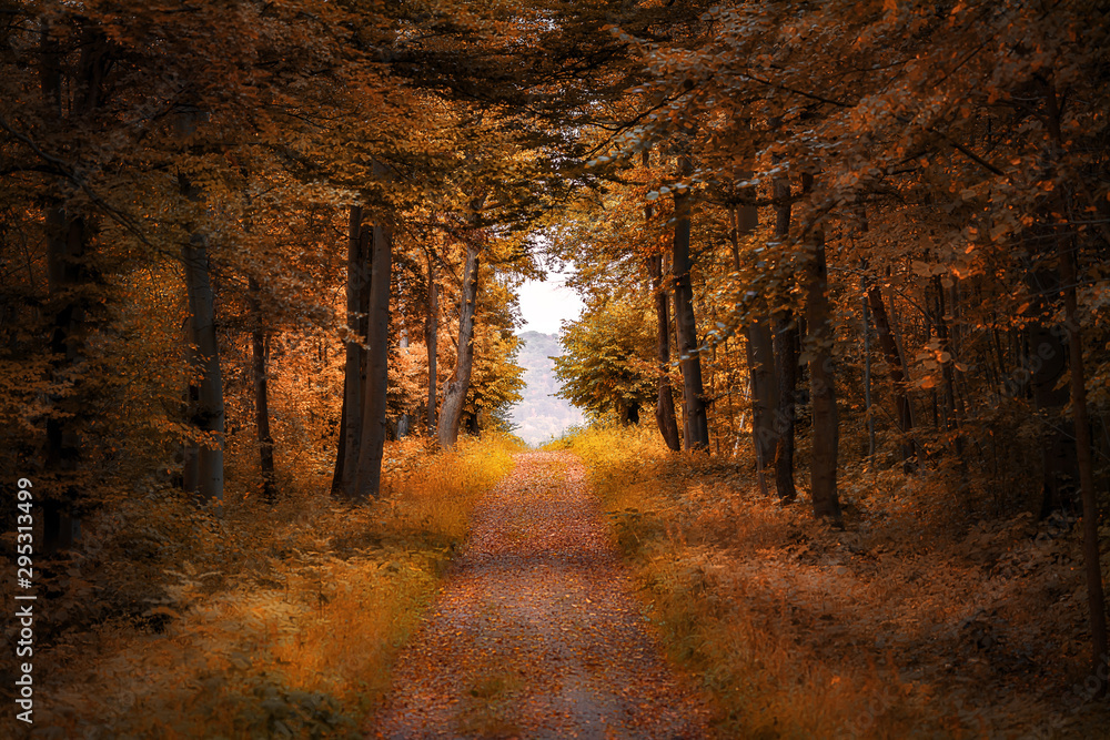 Fototapeta Straight path into a mystical forest clearing in autumn