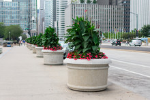 Row Of Planters With Flowers A...