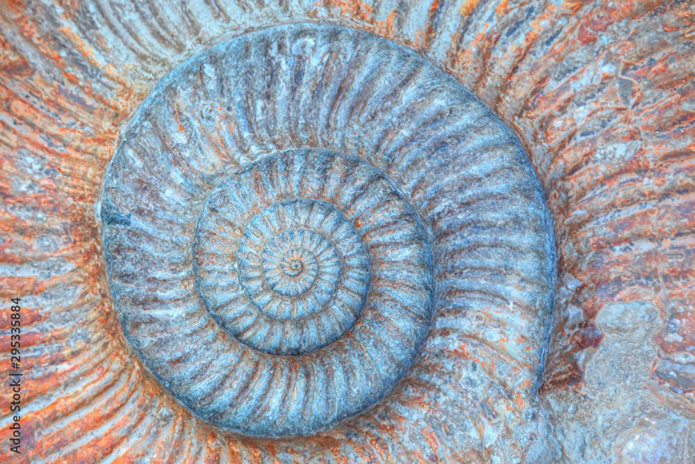 Fotografia Closeup of ammonite prehistoric fossil - Oxford University Museum of Natural His