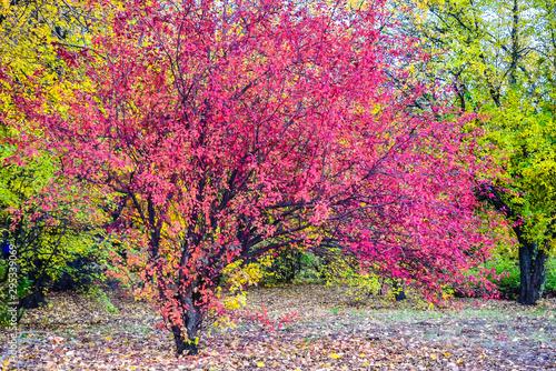 Photo sur Toile Route dans la forêt autumn landscape in the city Park in the early evening