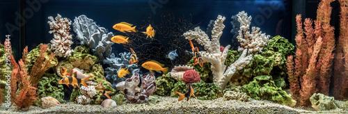 Naklejki akwarium  akwarium-slodkowodne-jako-pseudo-morze-aqua-scape-i-aqua-design