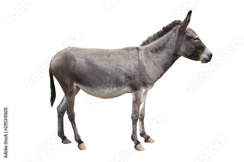 Fotobehang Ezel donkey isolated on white background