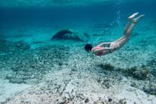 Snorkel Girl Swimmin At The Bl...