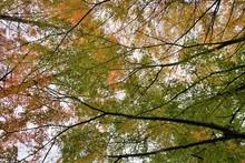 淡い秋の紅葉の色と光...