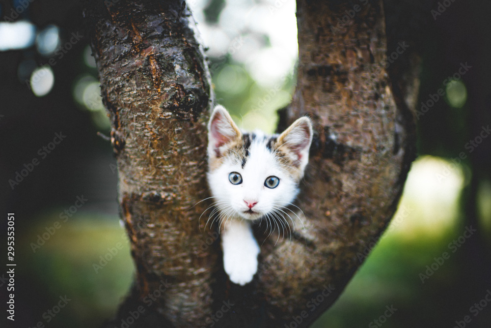 Fototapety, obrazy: Funny white kitten sits on a tree. Portrait of an domestic cat.