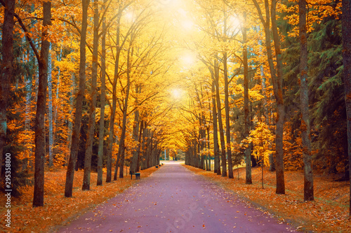 Foto op Aluminium Herfst Autumn view of an oak alley with bright light above the crowns a footpath and benches.